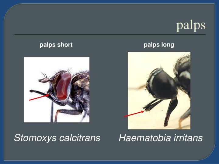 palps