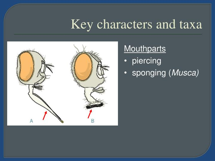 Key characters and taxa