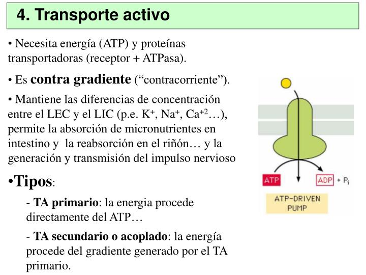 4. Transporte activo