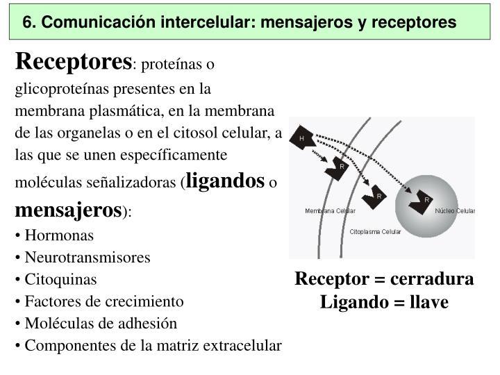 6. Comunicación intercelular: mensajeros y receptores