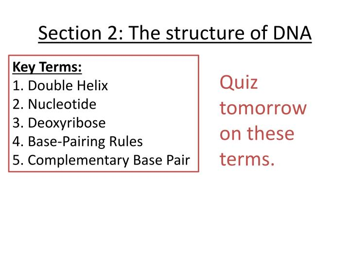 Section 2: The structure of DNA