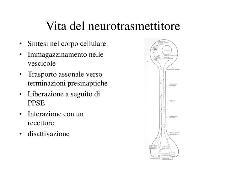 Vita del neurotrasmettitore