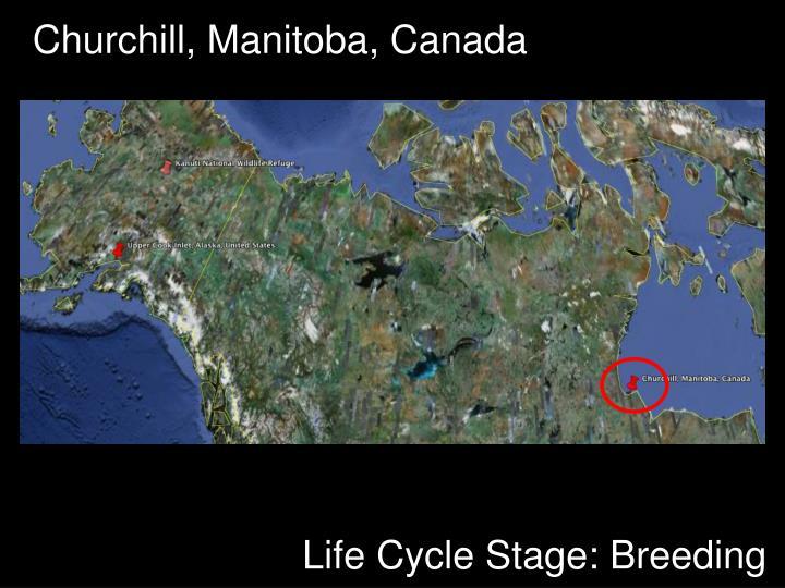 Churchill, Manitoba, Canada