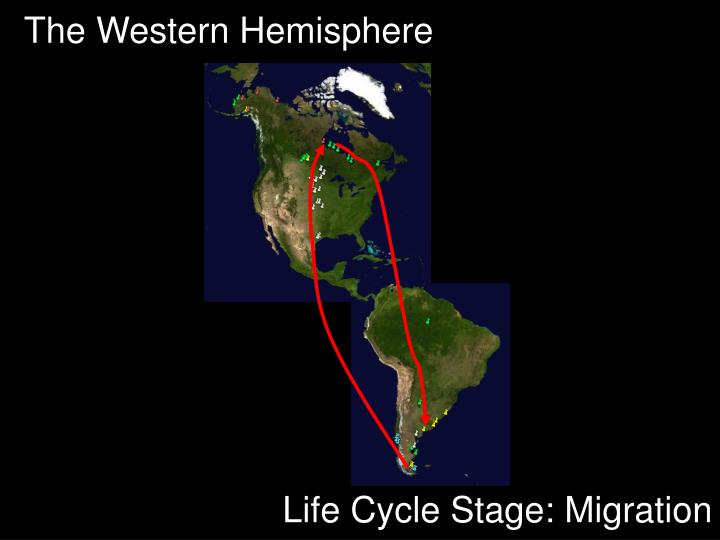 The Western Hemisphere