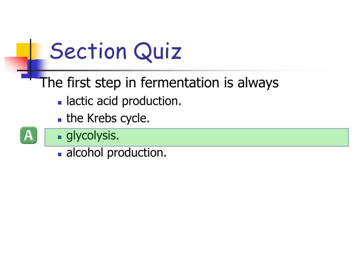 Section Quiz