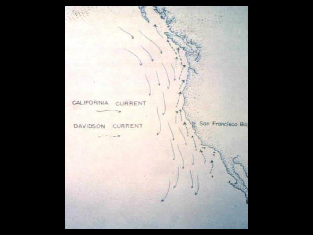 21. California Current