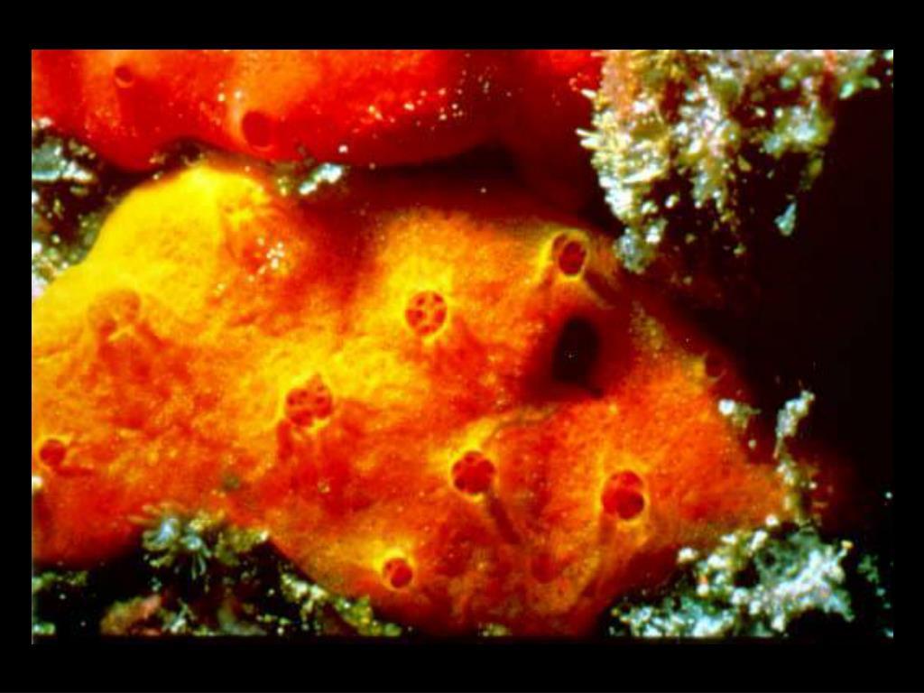 32. Sponges