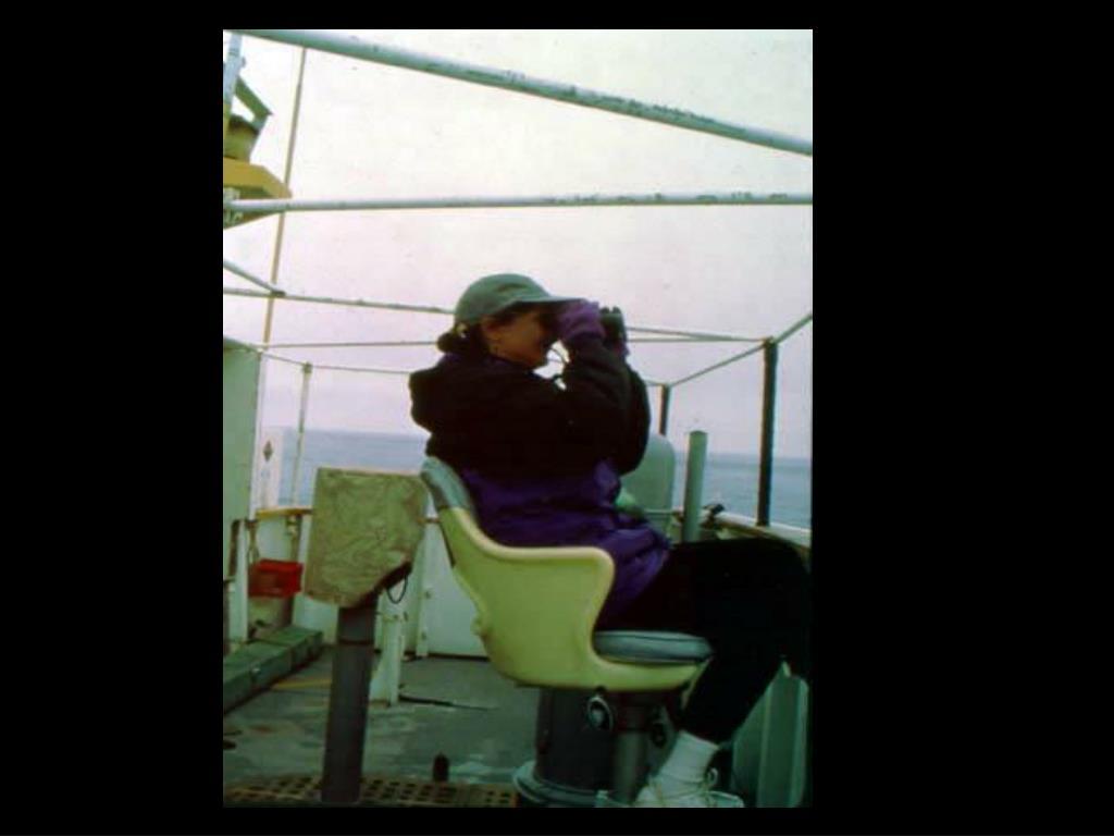 60. Seabirds observer