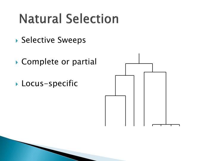 Selective Sweeps