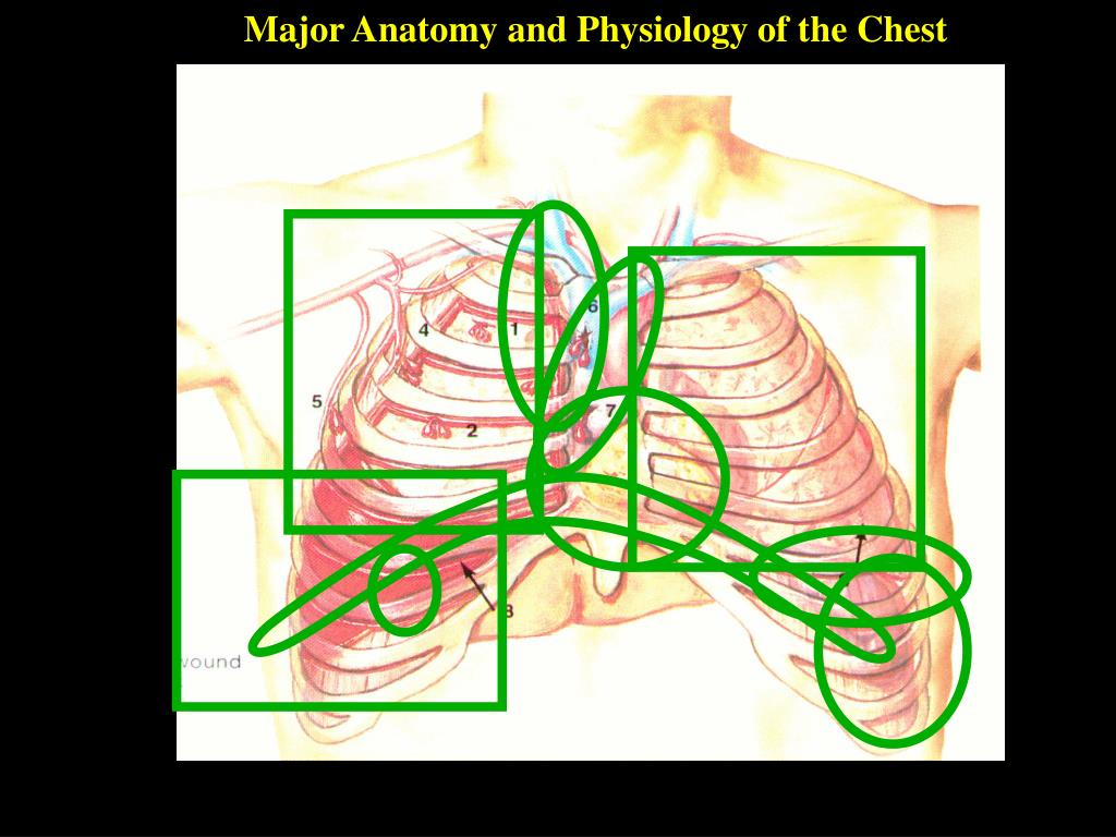 Major Anatomy and Physiology of the Chest