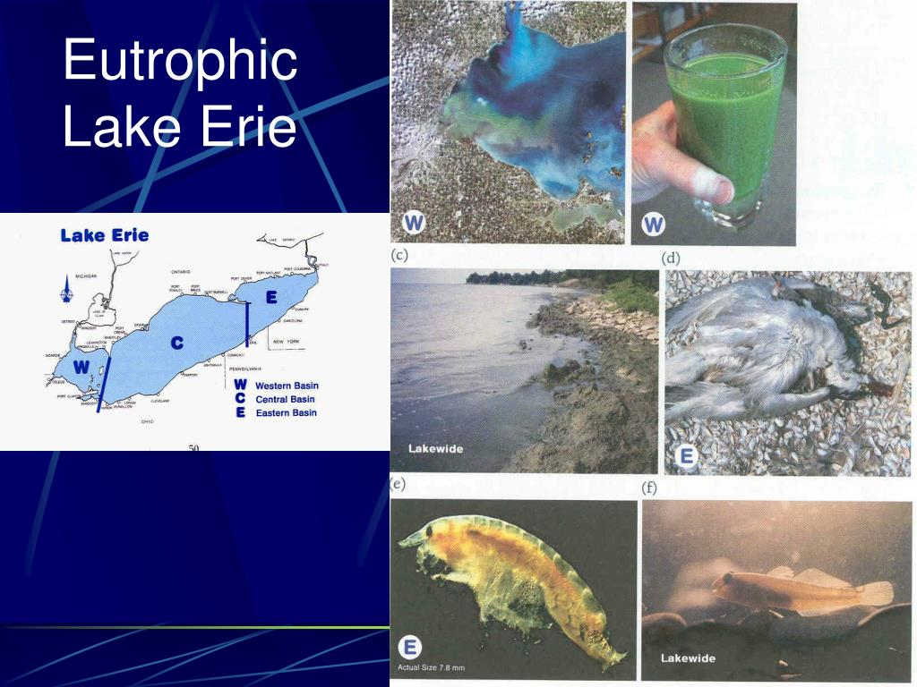 Eutrophic Lake Erie
