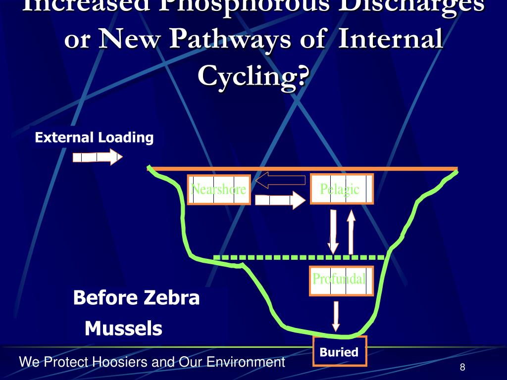 Increased Phosphorous Discharges or New Pathways of Internal Cycling?