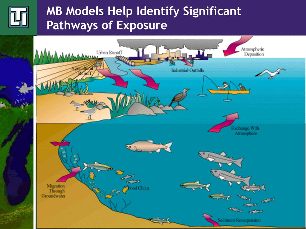 MB Models Help Identify Significant Pathways of Exposure