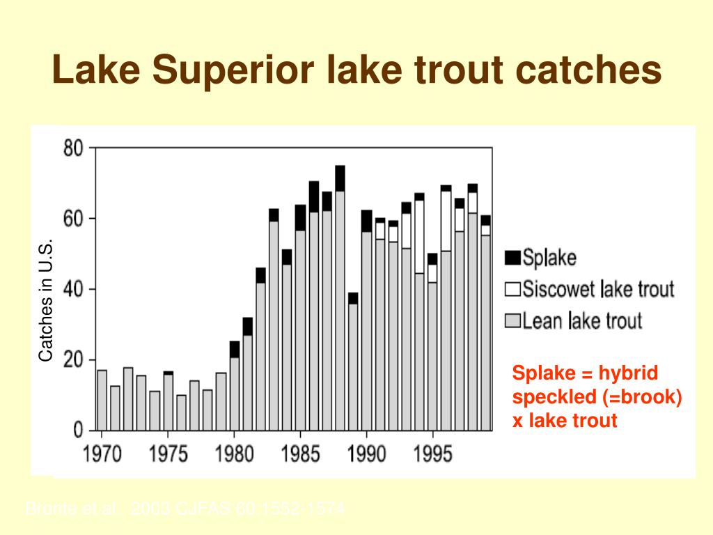 Lake Superior lake trout catches