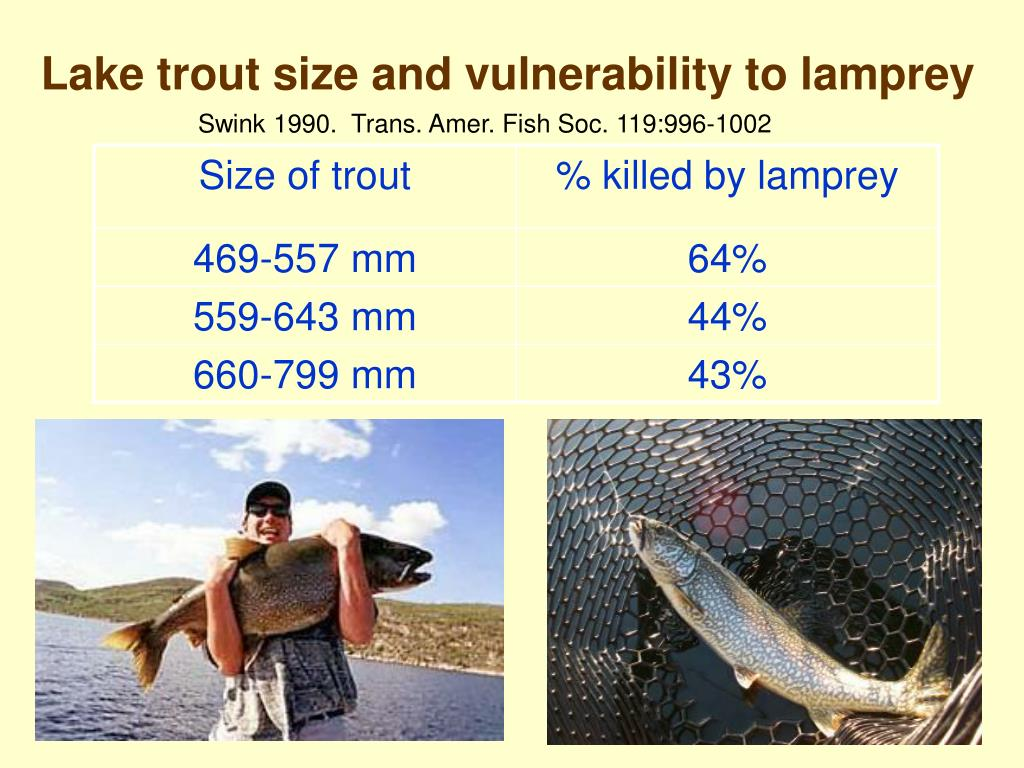 Lake trout size and vulnerability to lamprey
