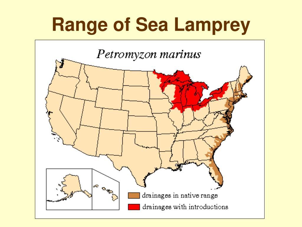 Range of Sea Lamprey