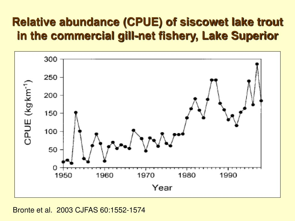 Relative abundance (CPUE) of siscowet lake trout in the commercial gill-net fishery, Lake Superior