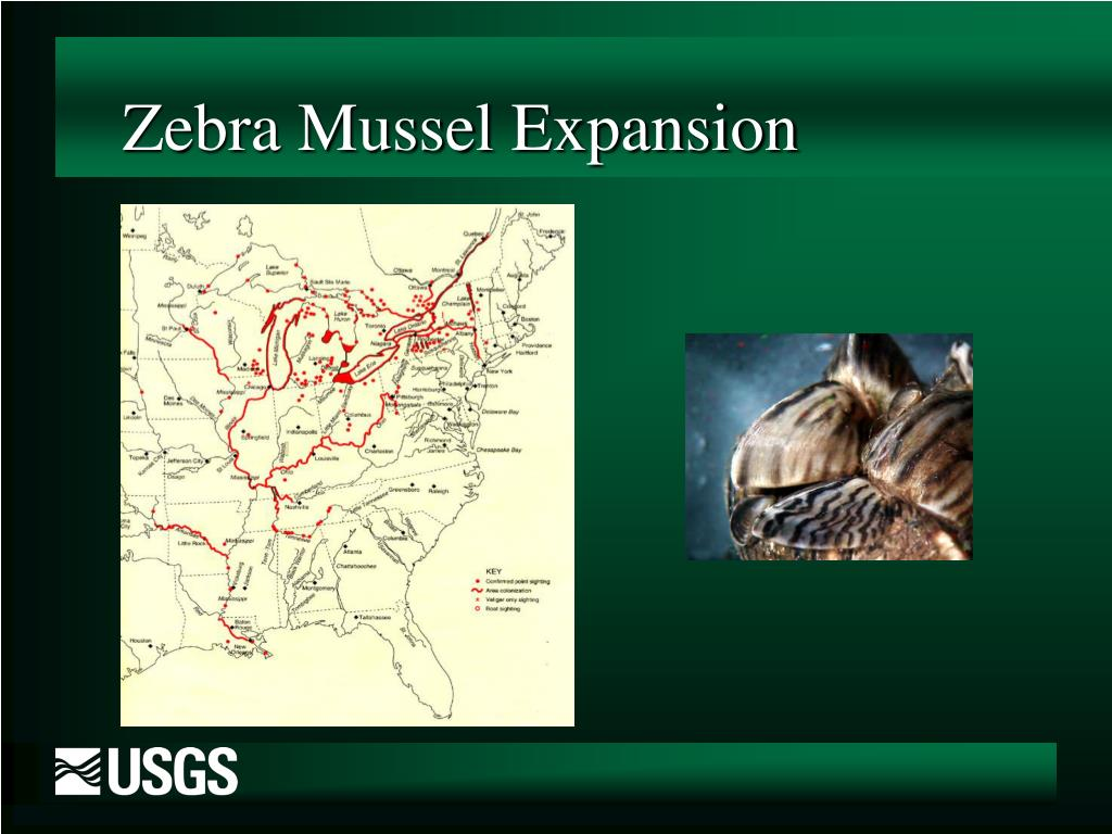 Zebra Mussel Expansion