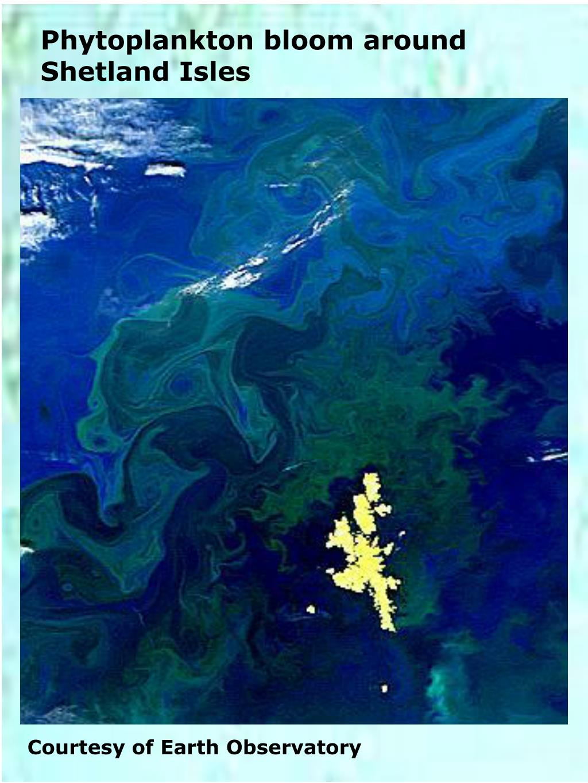 Phytoplankton bloom around Shetland Isles