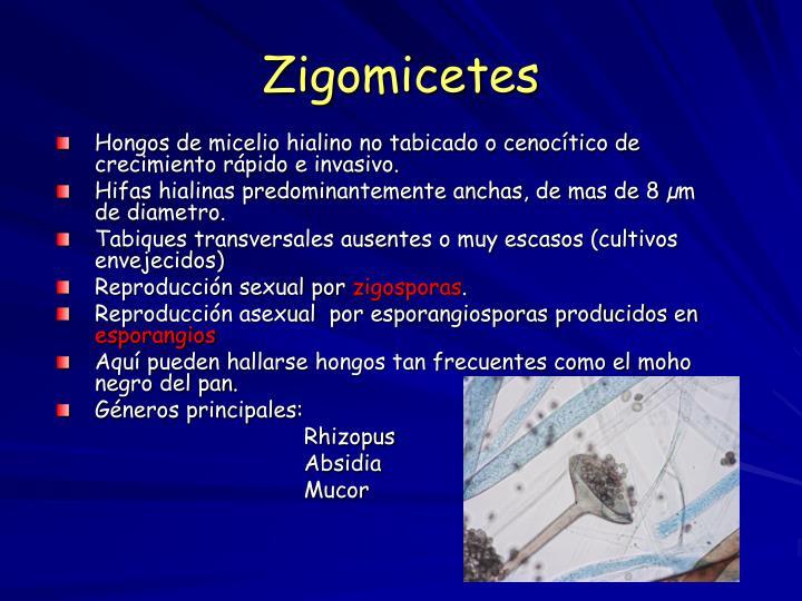 Zigomicetes
