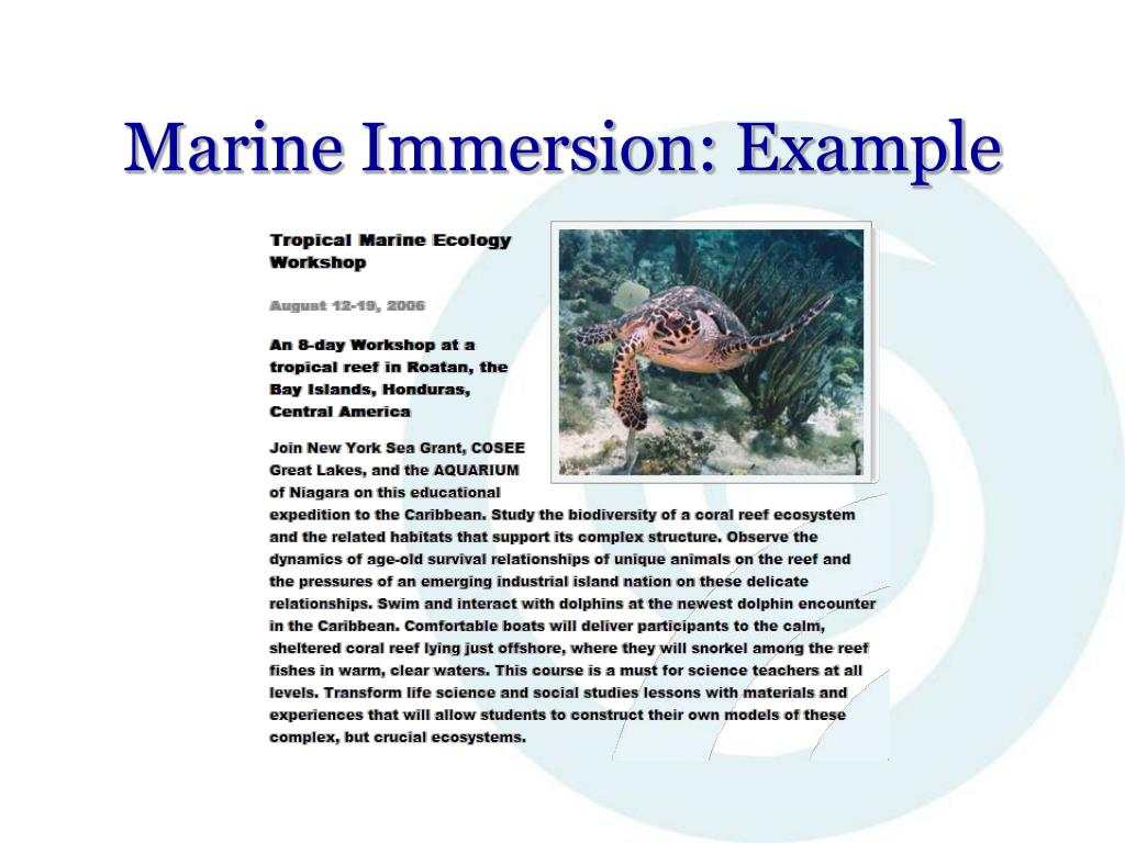 Marine Immersion: Example