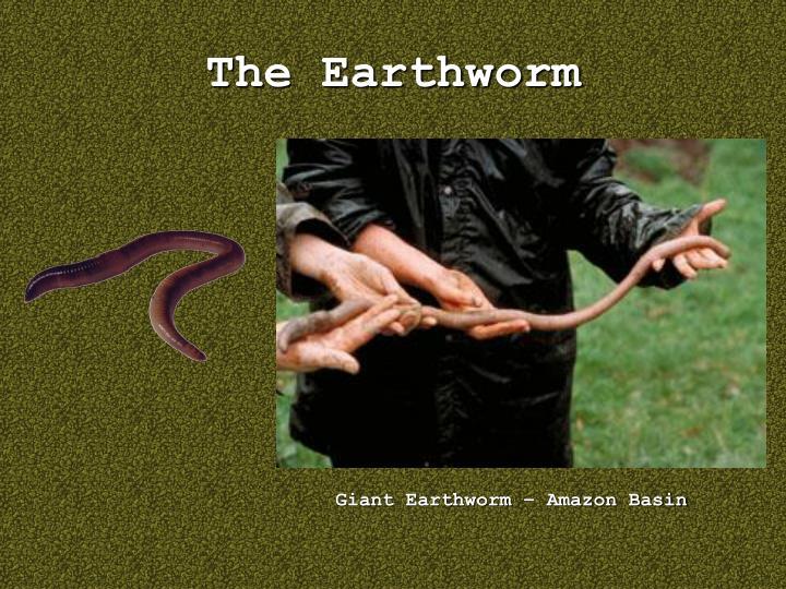 The Earthworm