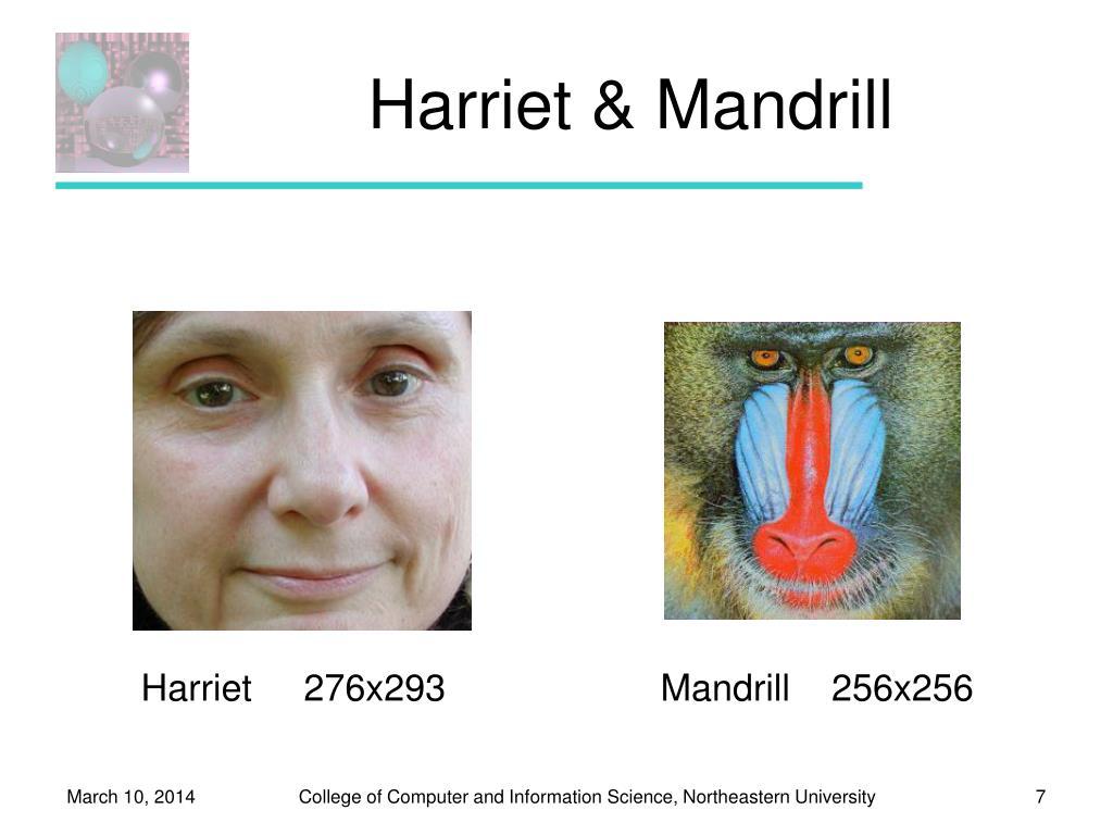 Harriet & Mandrill