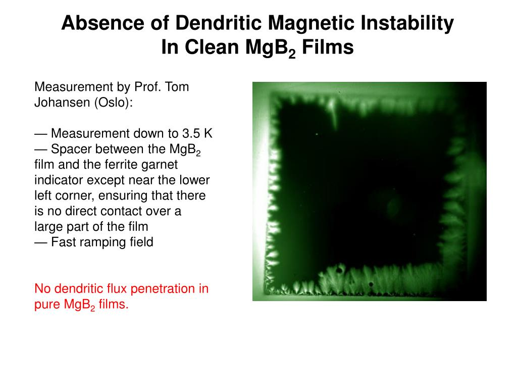 Absence of Dendritic Magnetic Instability