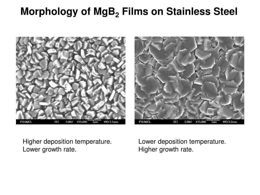 Morphology of MgB