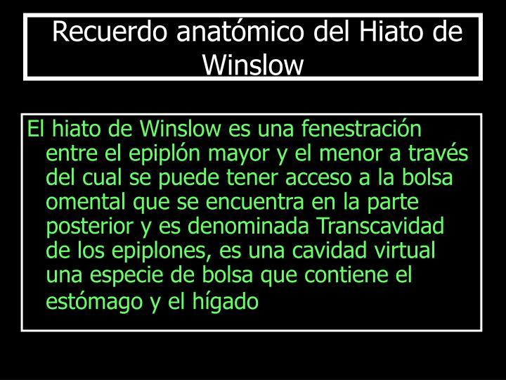 Recuerdo anatómico del Hiato de Winslow