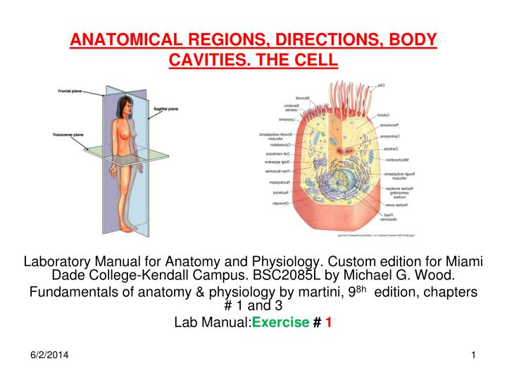Human anatomy body cavities