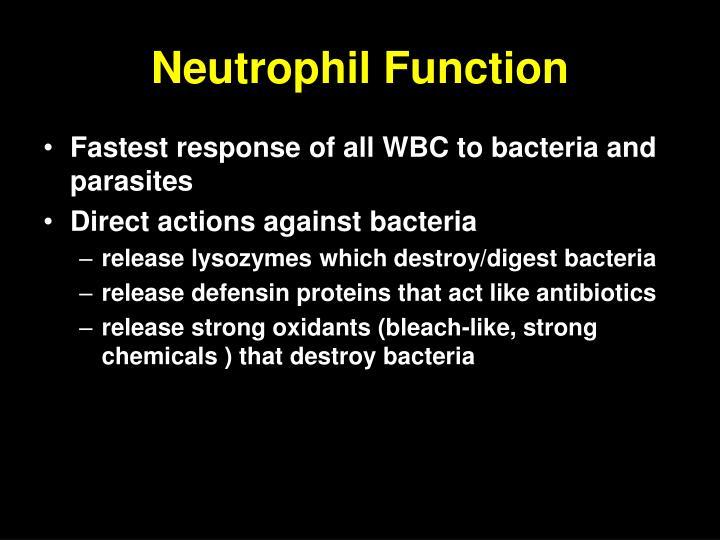 Neutrophil Function