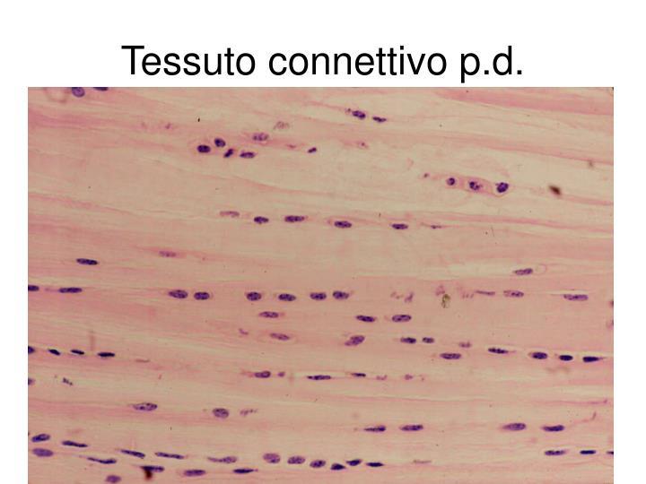 Tessuto connettivo p.d.