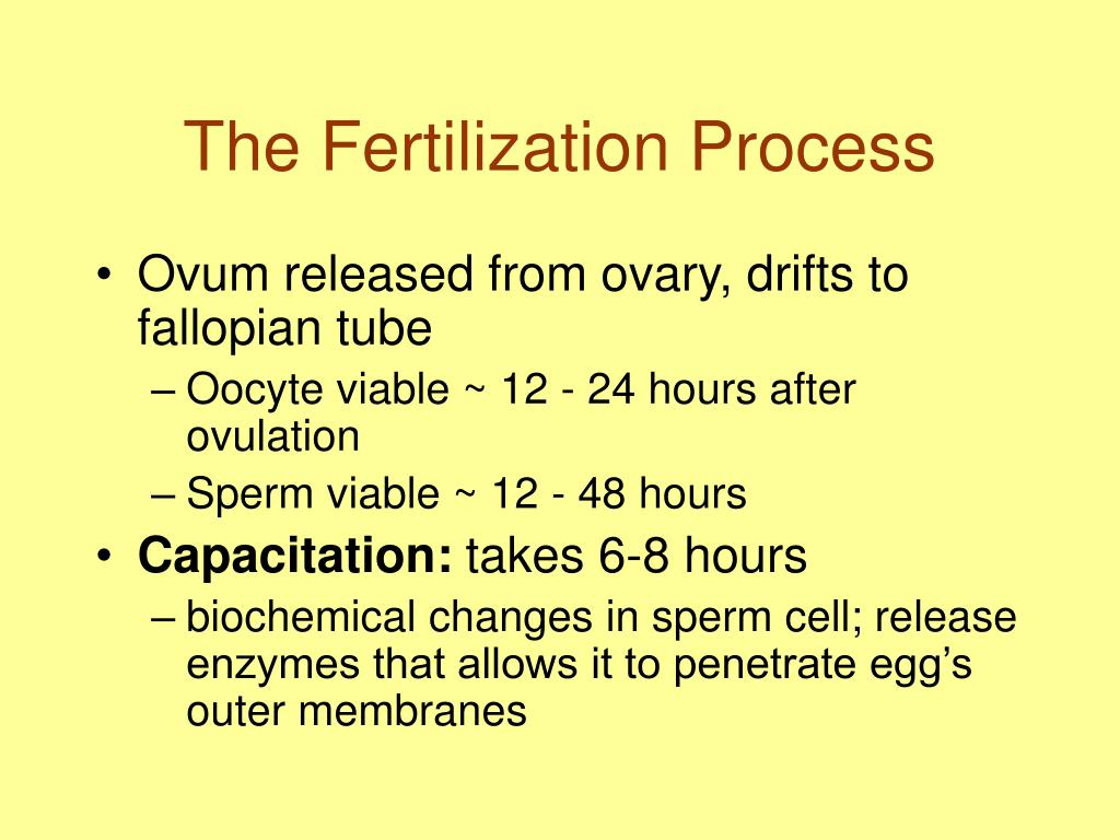 The Fertilization Process
