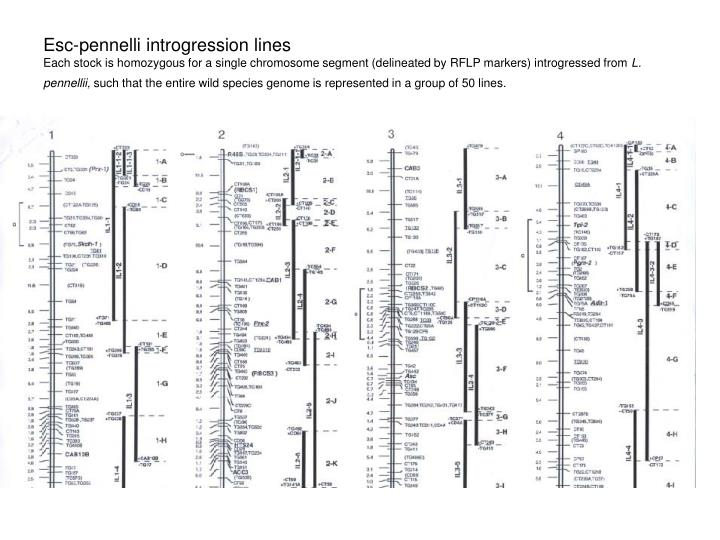 Esc-pennelli introgression lines