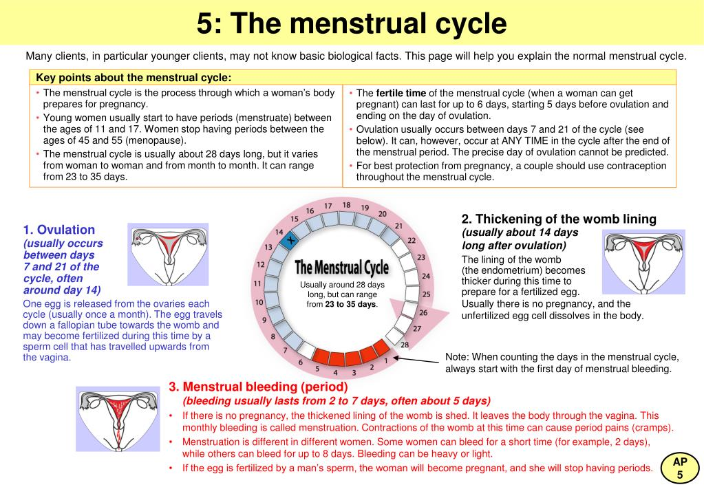 Key points about the menstrual cycle: