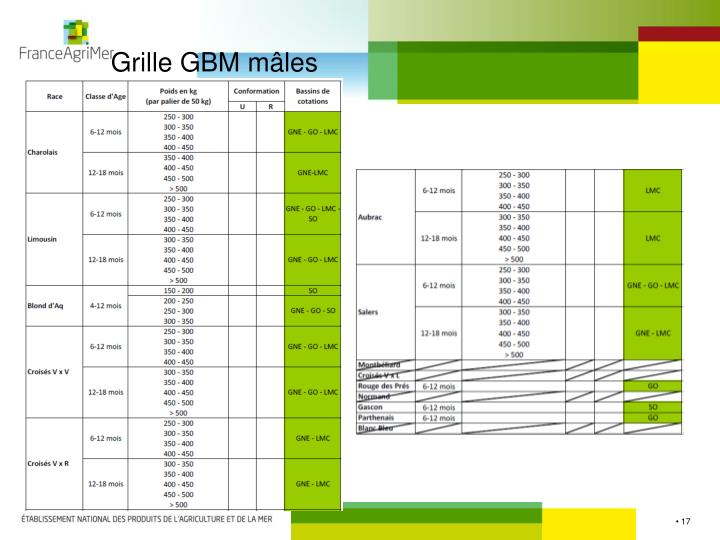 Grille GBM mâles