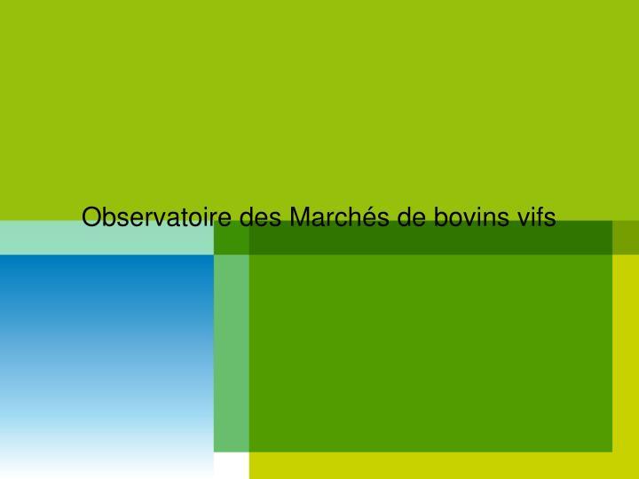 Observatoire des Marchés de bovins vifs