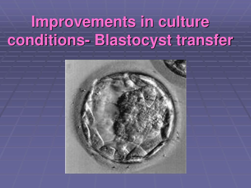 Improvements in culture conditions- Blastocyst transfer