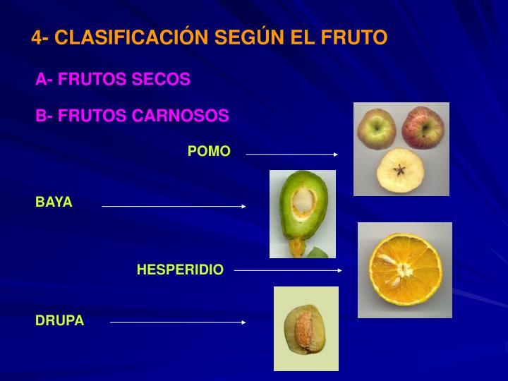 4- CLASIFICACI