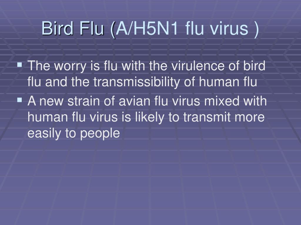 Bird Flu (