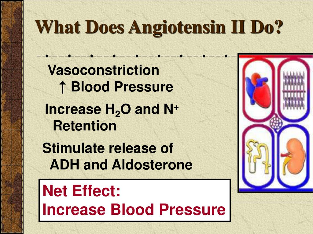 What Does Angiotensin II Do?