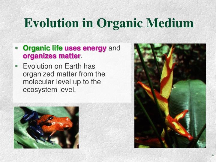 Evolution in Organic Medium