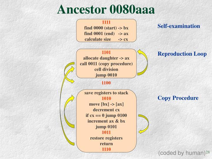 Ancestor 0080aaa