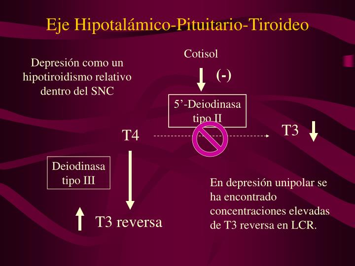 Eje Hipotalámico-Pituitario-Tiroideo