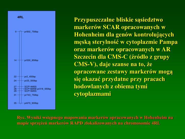 Przypuszczalne bliskie sąsiedztwo markerów SCAR opracowanych w Hohenheim dla genów kontrolujących męską sterylność w cytoplazmie Pampa oraz markerów opracowanych w AR Szczecin dla CMS-C (źródło z grupy CMS-V), daje szanse na to, że opracowane zestawy markerów mogą się okazać przydatne przy pracach hodowlanych z obiema tymi cytoplazmami