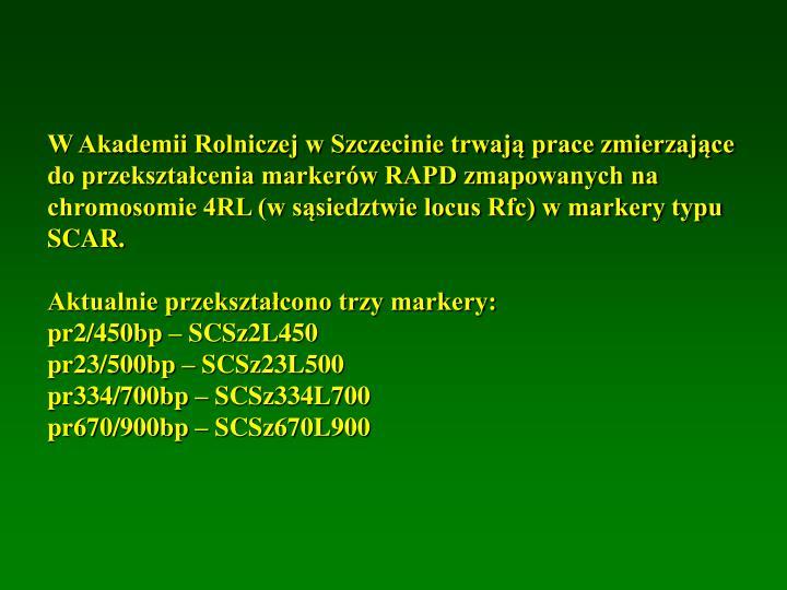 W Akademii Rolniczej w Szczecinie trwają prace zmierzające do przekształcenia markerów RAPD zmapowanych na chromosomie 4RL (w sąsiedztwie locus Rfc) w markery typu SCAR.