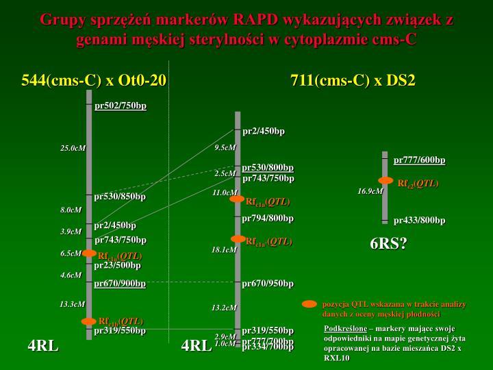 Grupy sprzężeń markerów RAPD wykazujących związek z genami męskiej sterylności w cytoplazmie cms-C