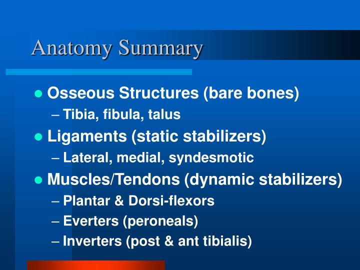 Anatomy Summary