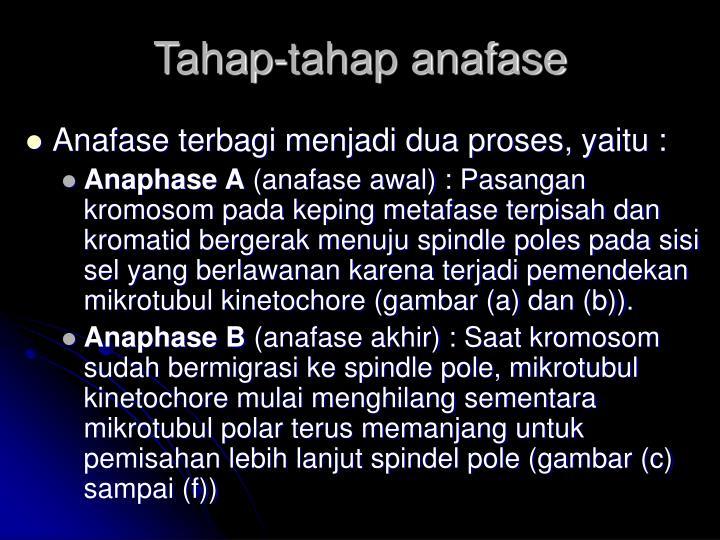 Tahap-tahap anafase
